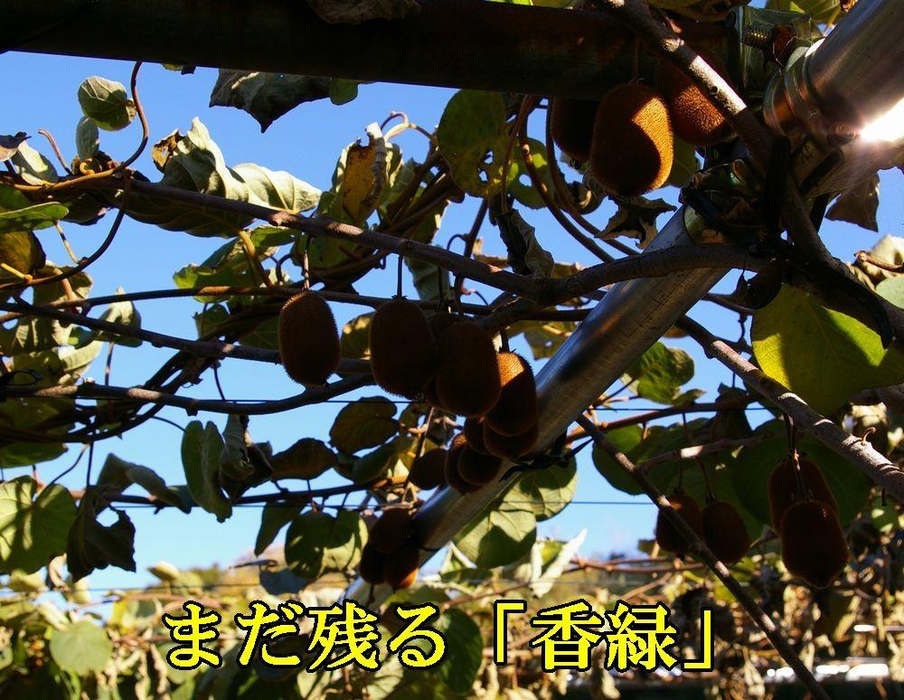 1kouryoku1203c1.jpg