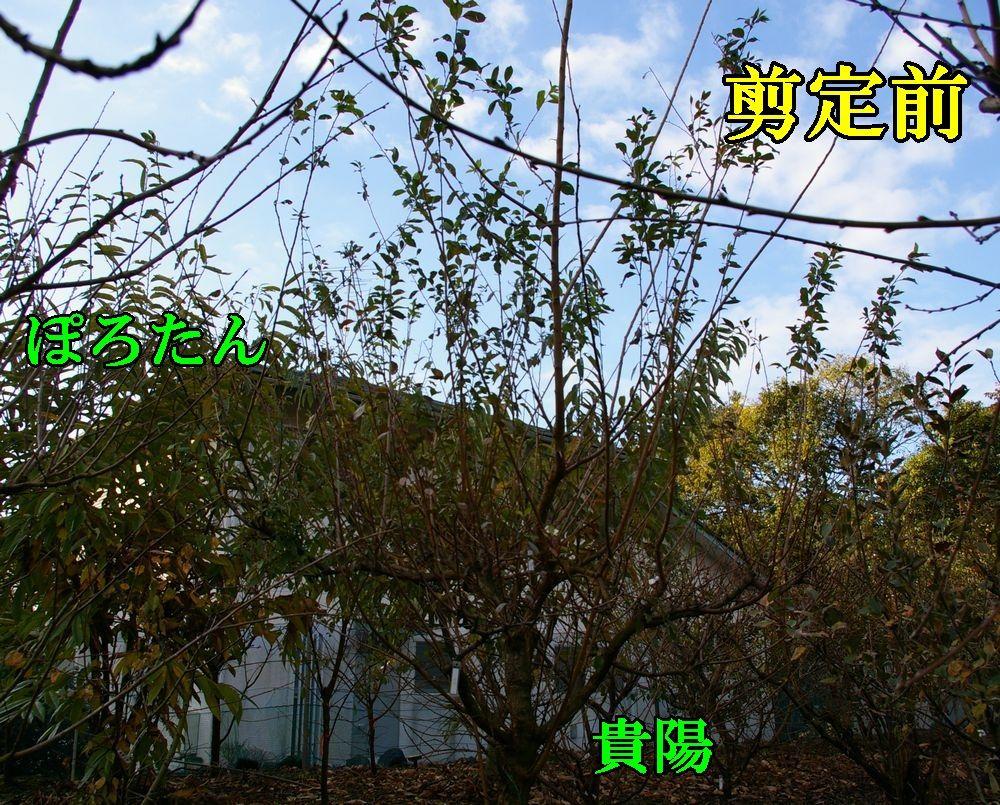 1kuri_kiyo1208c1.jpg