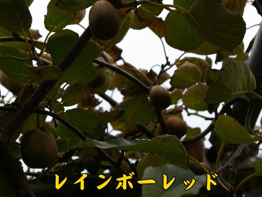 1rainbow1102c1.jpg