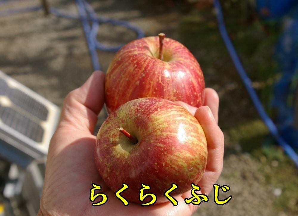 1rakufuji1207c1.jpg