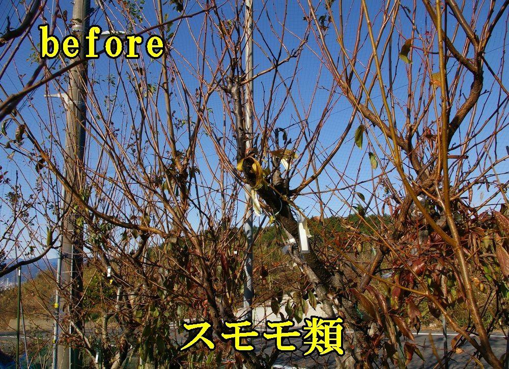 1sumomo1207c1.jpg