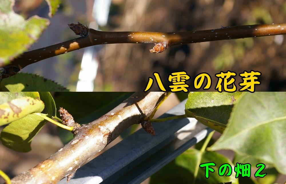 1yakumo1116c2.jpg