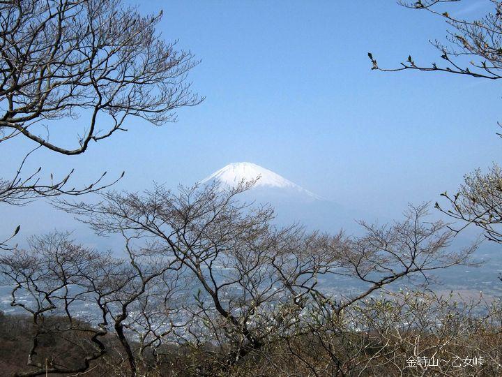 金時山~乙女峠3(富士山)