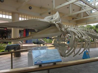 クジラの骨組