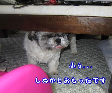 0511-03_20130511212632.jpg