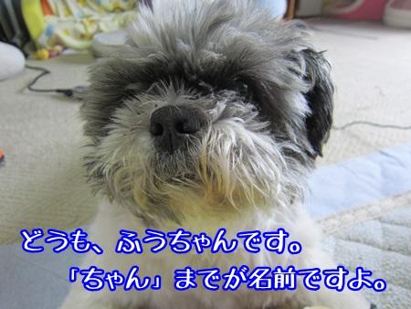 0601-01_20130601210615.jpg