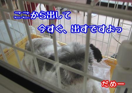 0729-03_20130729210806.jpg