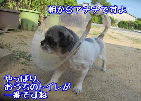 0803-01_2013080322431618d.jpg