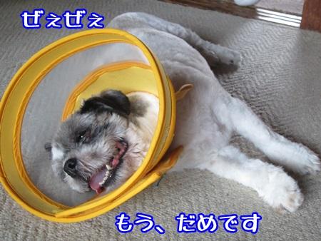 0810-01_20130810160637ea0.jpg