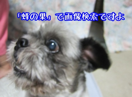 0822-03_201308222053064ec.jpg