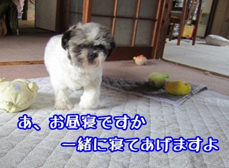 1008-01_20131008151311592.jpg