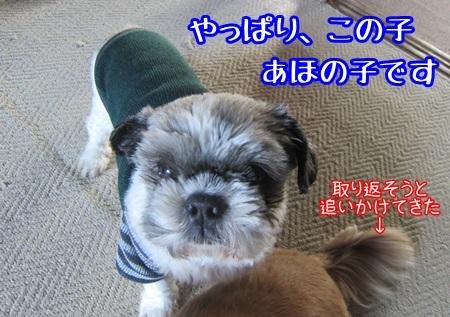 1112-05_20131112160358e8c.jpg