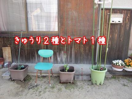 0507-きゅうり