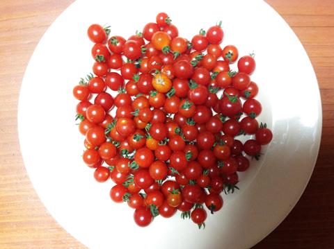 Rolling トマト