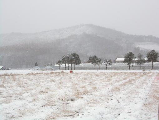 20131111_一気に冬景色