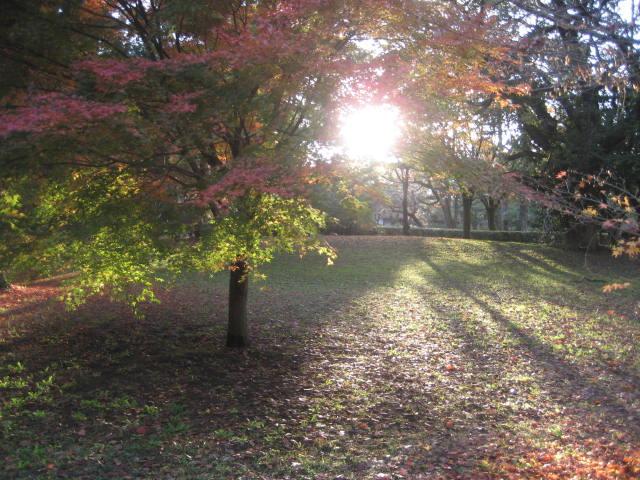 141129御所さんぽ④紅葉と夕陽