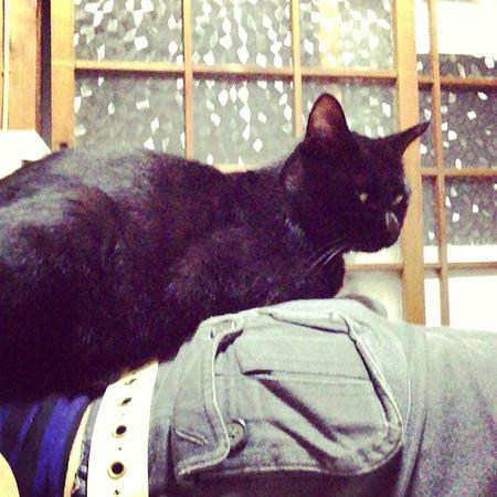 アール 黒猫