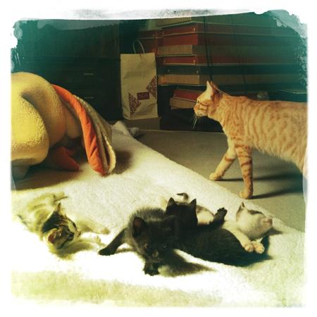 捨て猫 里親募集 子猫
