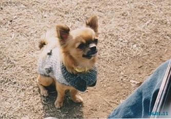 手編みの服のミロ - コピー