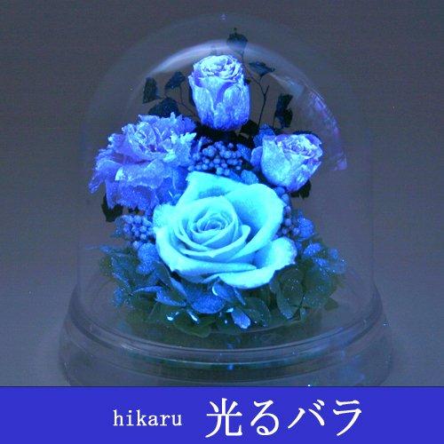 光るバラ-1