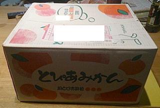 mikan@shizuoka01.jpg