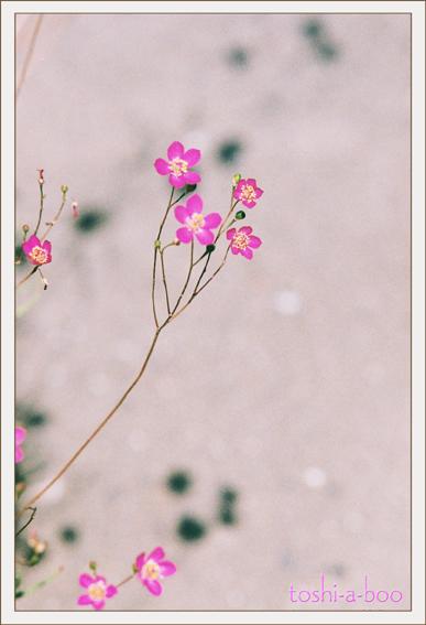 blognatsunogogo.jpg