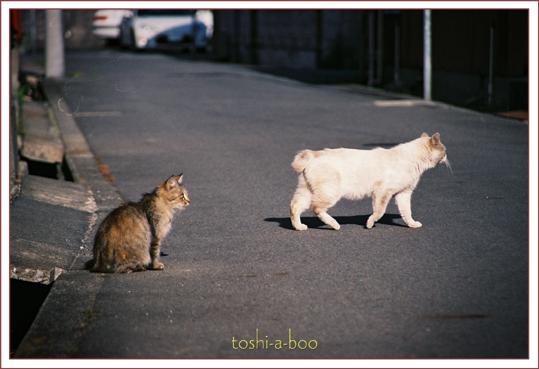 cats2_20130426193328.jpg