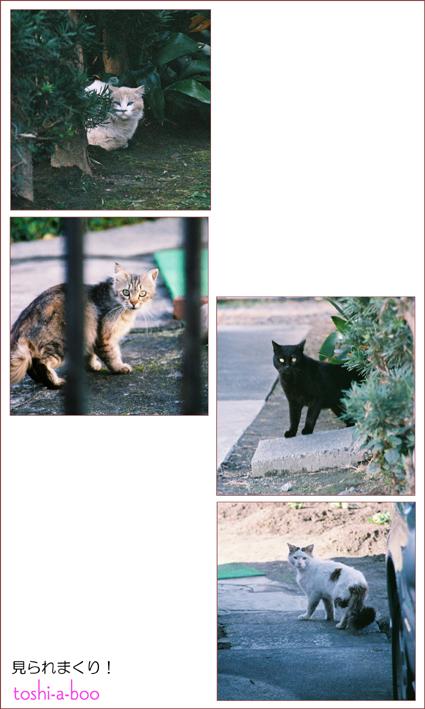 cats_20130509114542.jpg