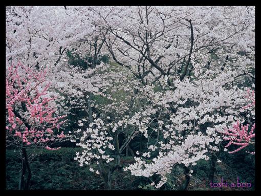 komakiyamaga645.jpg
