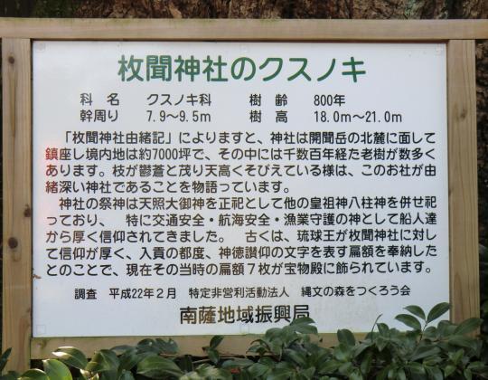 枚聞神社クスノキ説明書き