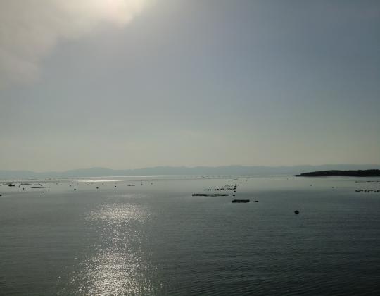 錦江湾ぶり筏