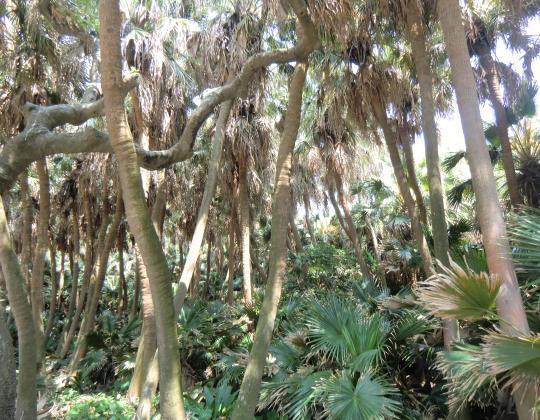 青島ジャングル