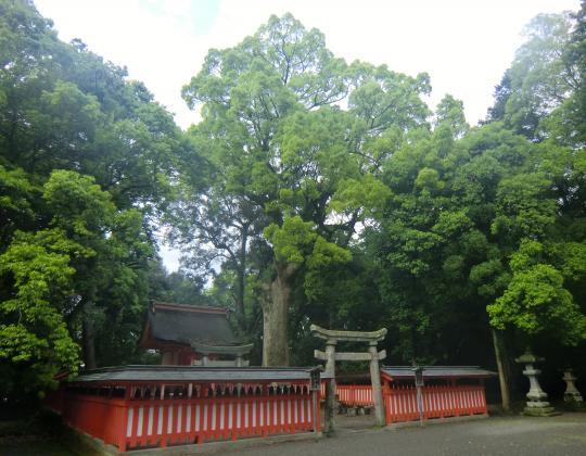 宇佐神宮養蚕神社 (1)
