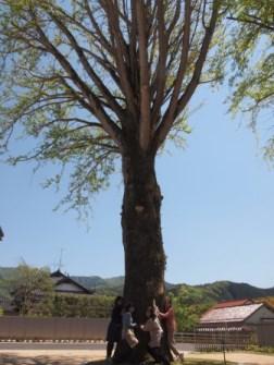 P5122002洗浄阿東の木