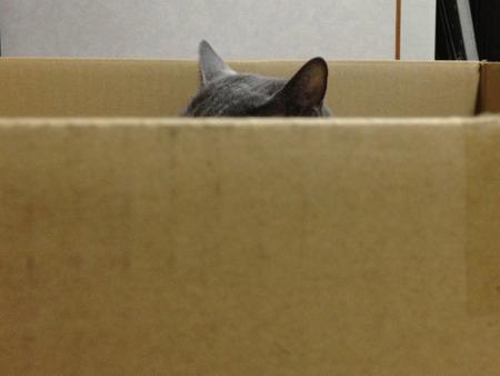 箱みどり1
