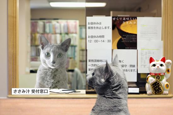 猫役所10