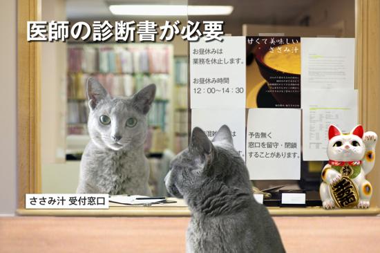 猫役所12