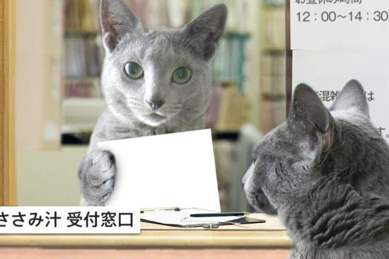 猫役所13