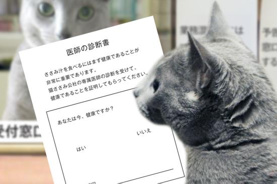 猫役所14
