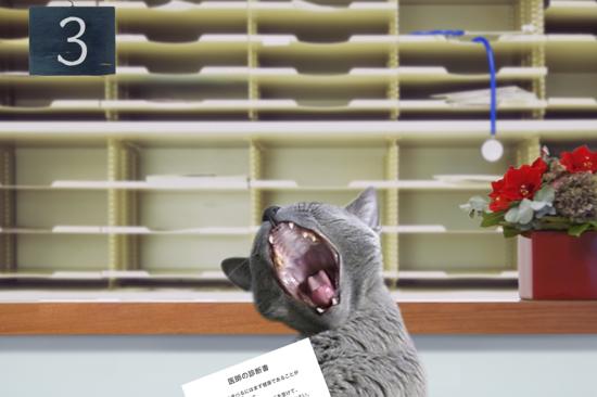 猫役所17
