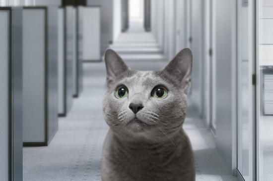 猫役所22