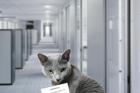 猫役所29