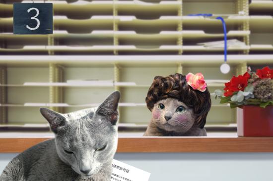 猫役所32