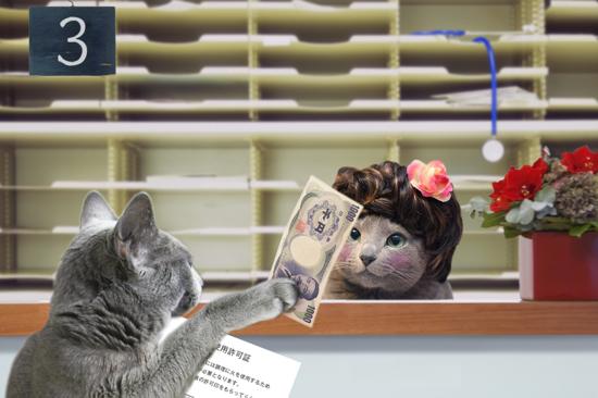 猫役所34