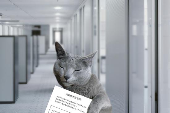 猫役所35