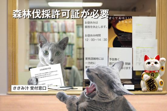 猫役所37