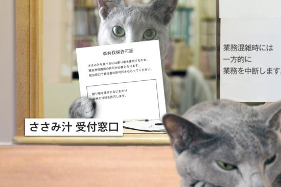 猫役所38
