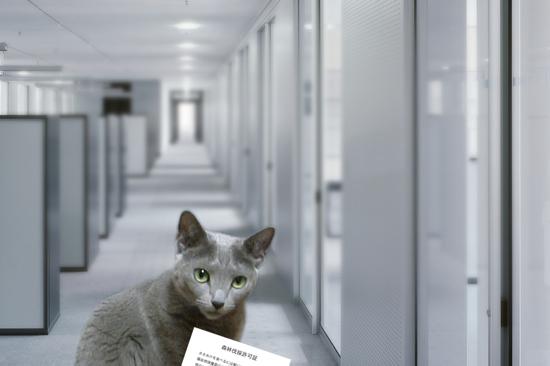 猫役所39