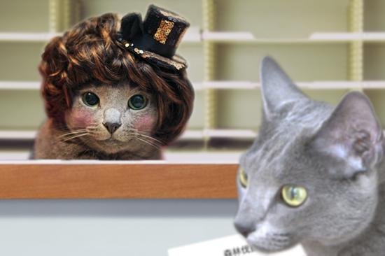 猫役所41