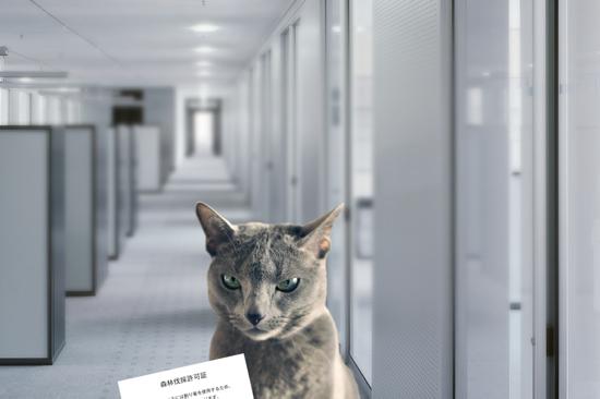 猫役所44